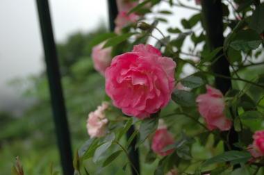 雨だけど・・・_a0104074_16383787.jpg