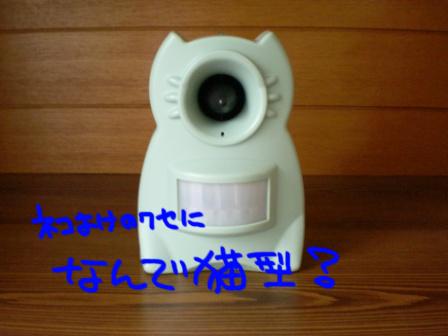 a0076980_1037921.jpg