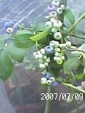 a0065807_1234339.jpg