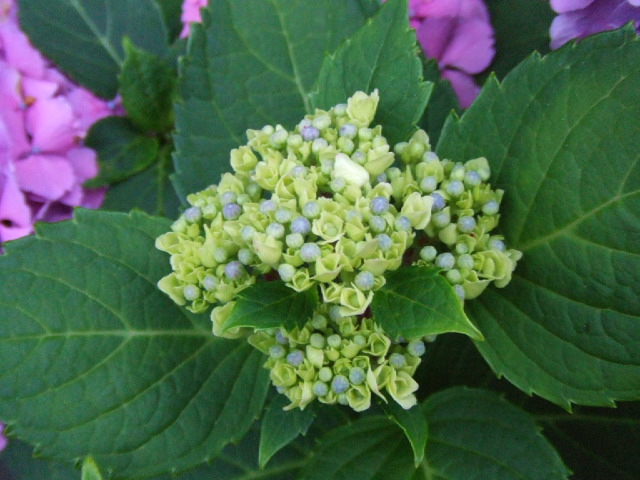 夏近し、野菜豊作。_e0012815_231706.jpg