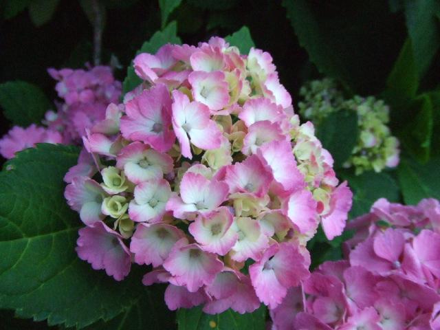夏近し、野菜豊作。_e0012815_23173193.jpg