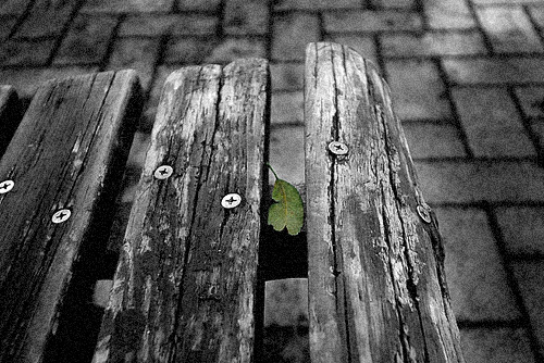 雨のち曇り_e0117517_34776.jpg