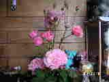 a0020929_965735.jpg