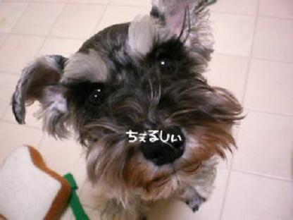 BABYCAKEモデル決定!!_b0084929_020286.jpg
