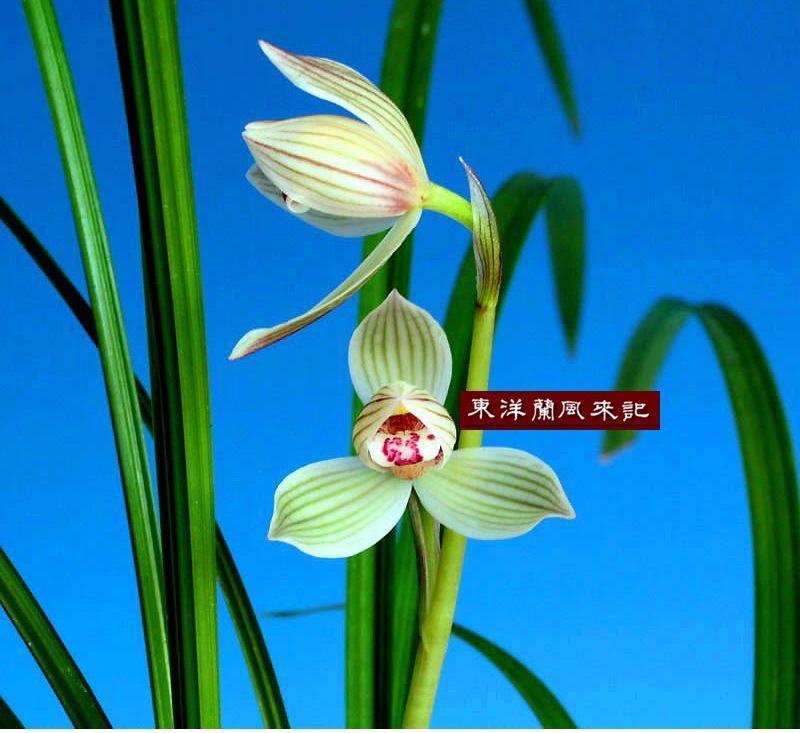 ◆曇天~!!!,、。                    No.7_d0103457_3222530.jpg