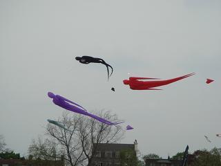 kite day_a0102784_22302573.jpg