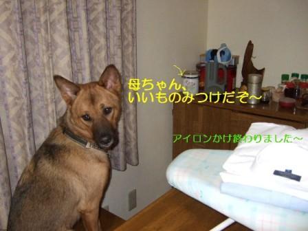 b0087400_0195799.jpg