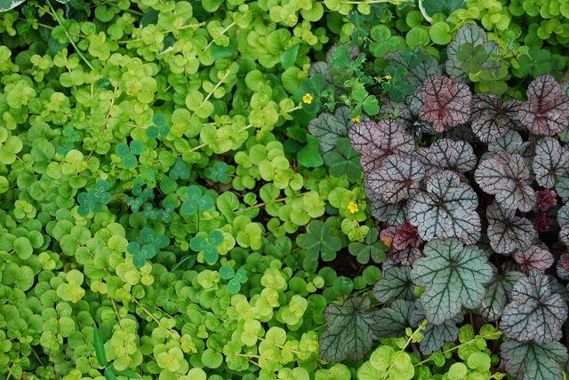 庭師の草たちがすごいことになっている_c0124100_22441446.jpg