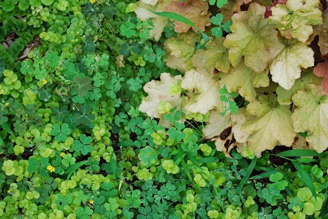 庭師の草たちがすごいことになっている_c0124100_22442486.jpg