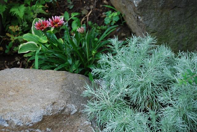 庭師の草たちがすごいことになっている_c0124100_22443879.jpg