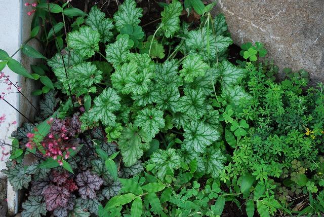 庭師の草たちがすごいことになっている_c0124100_22444653.jpg
