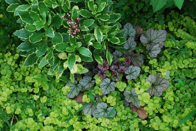 庭師の草たちがすごいことになっている_c0124100_22445665.jpg