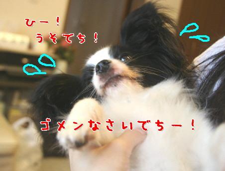 d0013149_262342.jpg