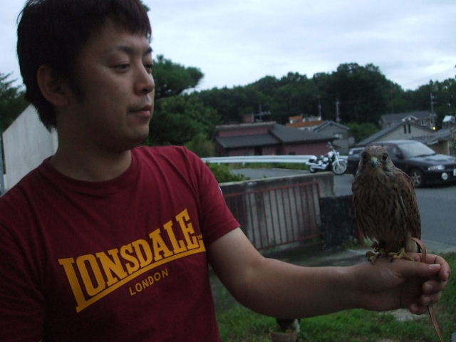 Shin is a Falconry bird._d0083692_20335852.jpg