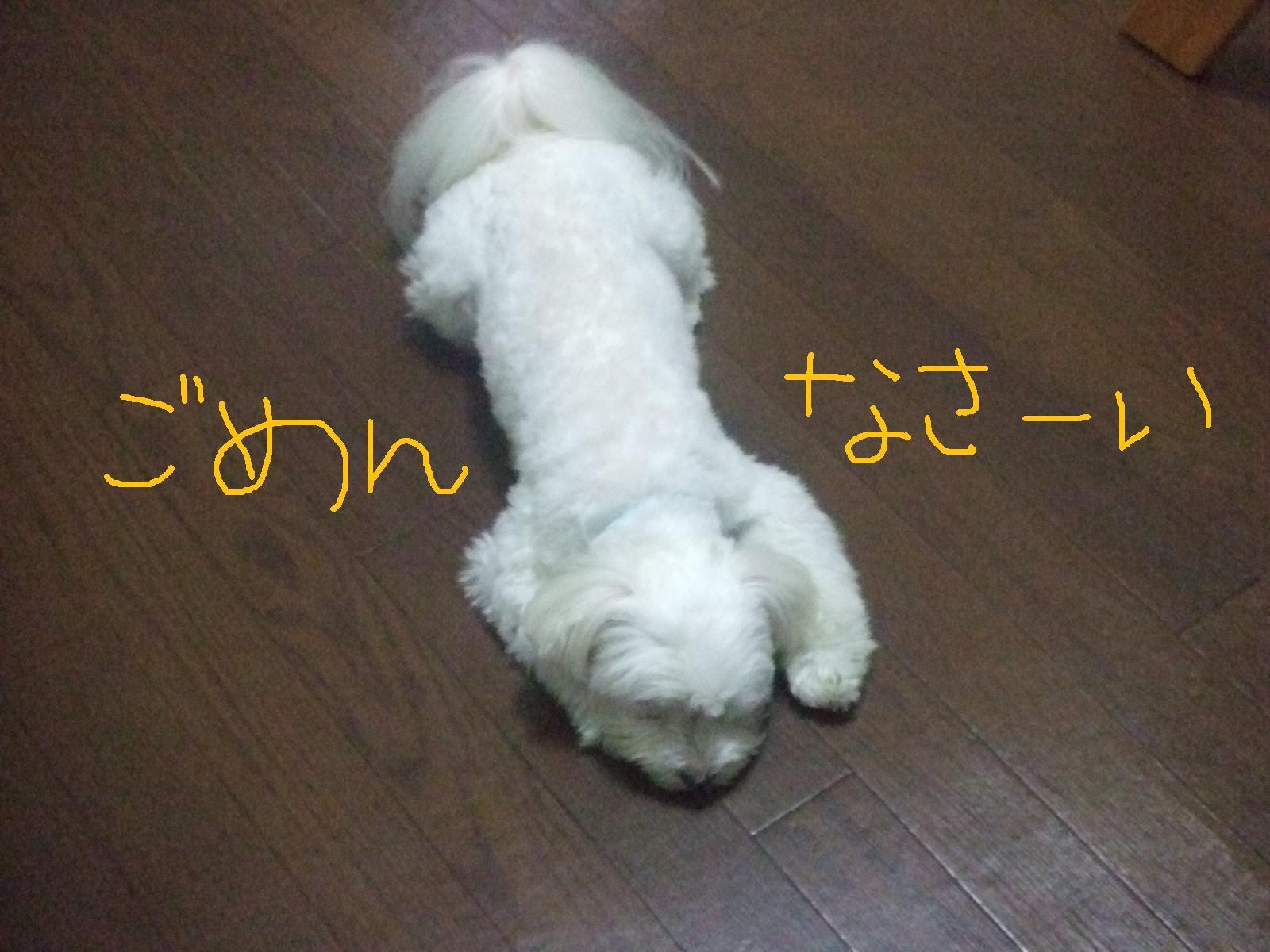 f0148595_1859627.jpg