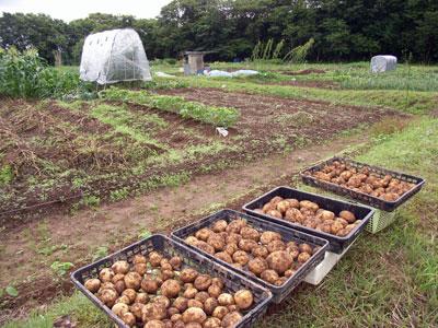 農園便り・梅雨の晴れ間_c0063348_22333590.jpg