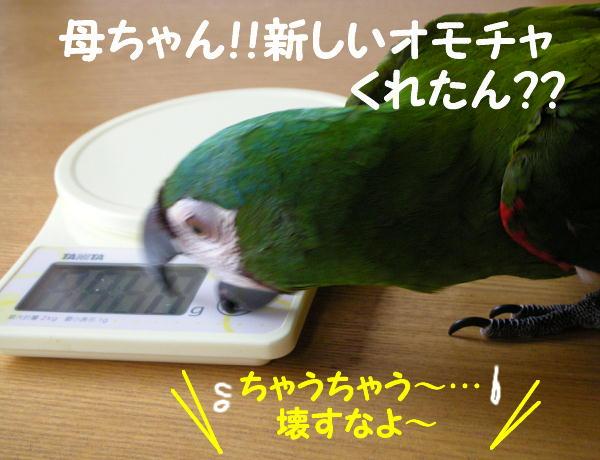 f0132055_23484331.jpg