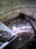 和釜の炉掃除・酒かす出し&詰め・竹竿直し・・・_d0007957_23162314.jpg