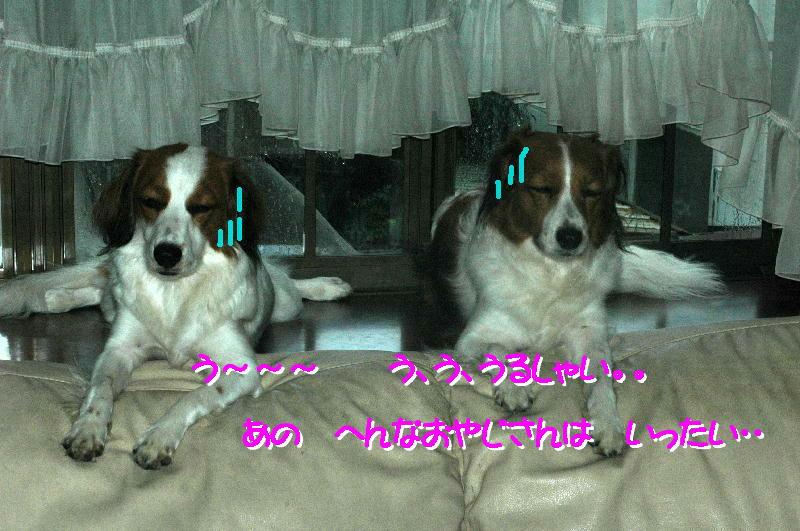 c0075585_22321376.jpg