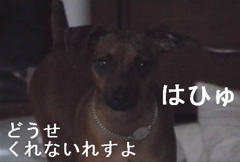 f0123589_15333966.jpg