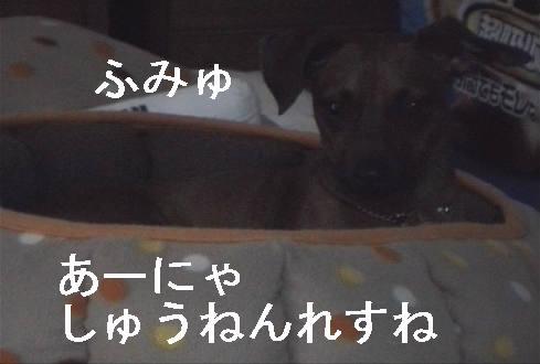 f0123589_1536074.jpg