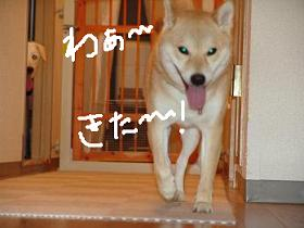 里帰り~♪_f0086814_23401828.jpg