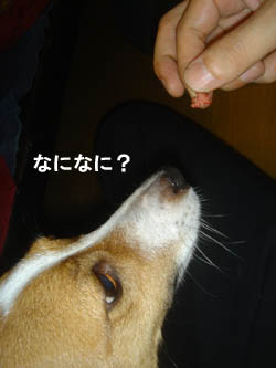 b0098652_0881.jpg