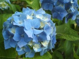 北大植物園_e0075356_22401867.jpg