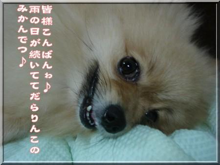 b0078073_21504775.jpg