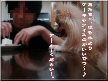 b0078073_2244323.jpg