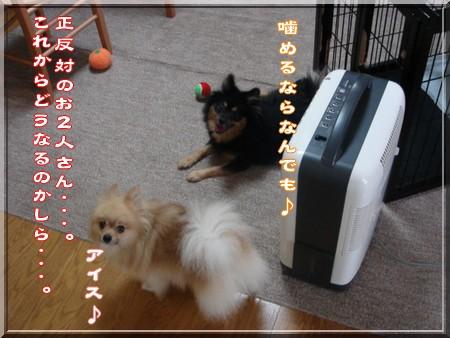 b0078073_225189.jpg