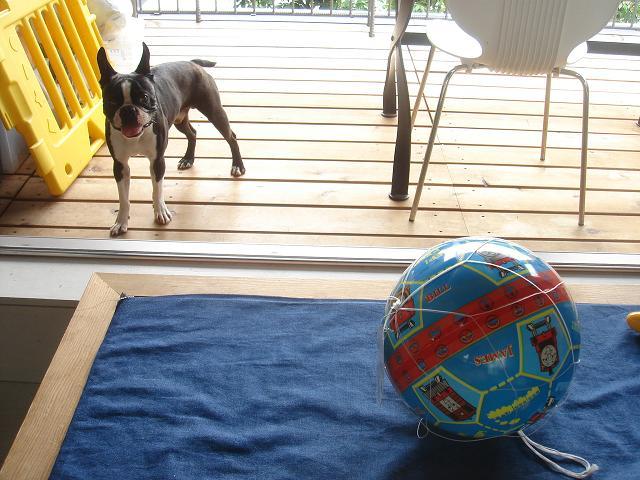 ボールが好きなんです。_b0027203_2234479.jpg