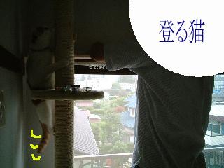 c0006312_212757.jpg