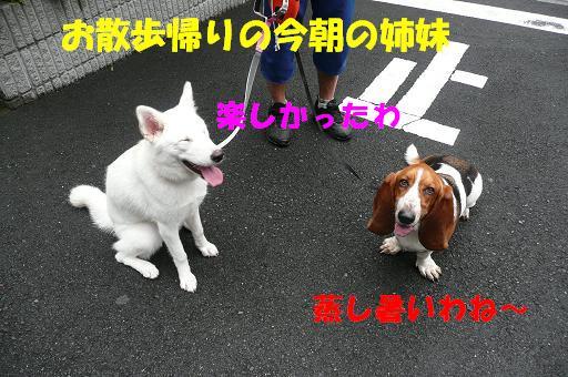 f0121712_16221441.jpg