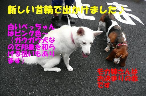 f0121712_16222731.jpg