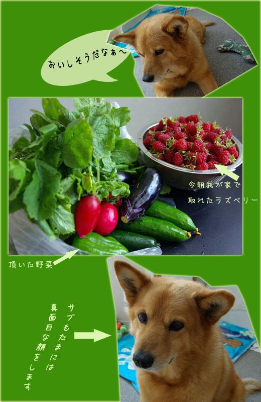 b0019313_20113321.jpg