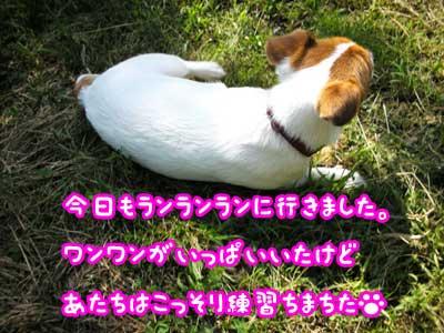 f0129214_20374551.jpg
