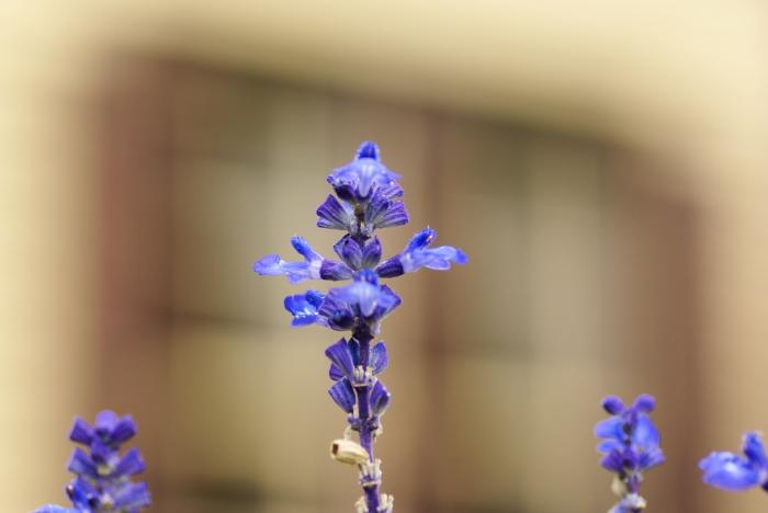 Cross blue_e0077521_1362.jpg