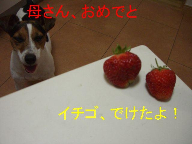 f0053952_143549.jpg