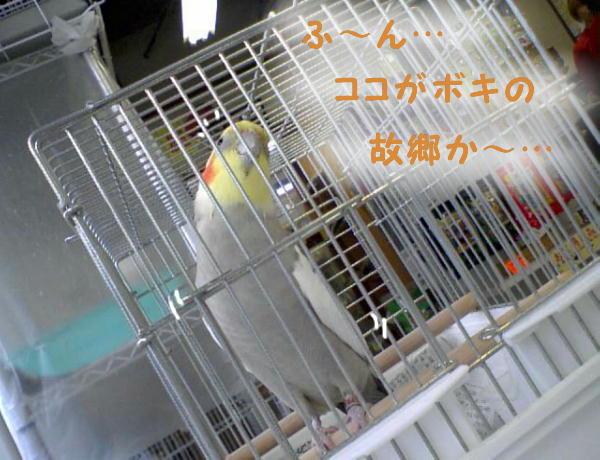 f0132055_2139932.jpg