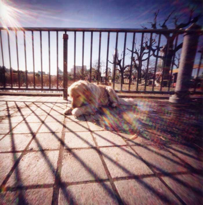 影で遊ぶ 上野不忍池の犬 Pinhole Photography_f0117059_19585951.jpg