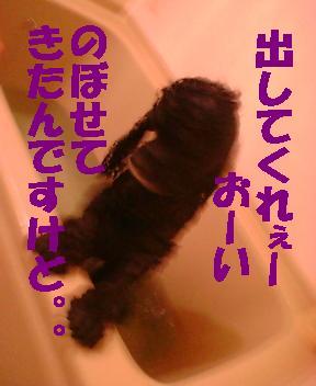 毛布は 家で、洗ってます♪_f0096569_13181498.jpg