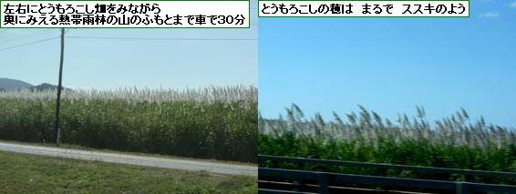 a0084343_2022375.jpg