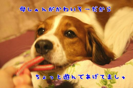 d0013149_159197.jpg