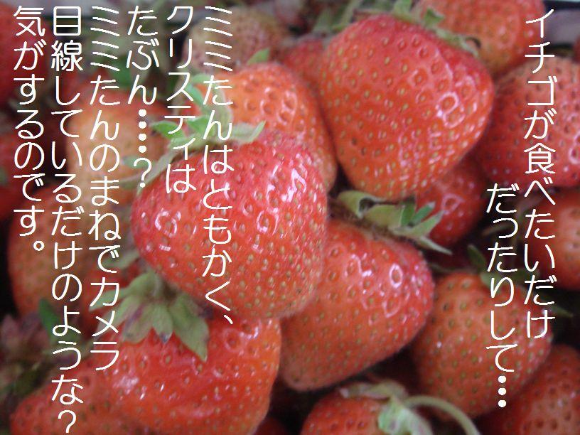 c0090198_0462424.jpg
