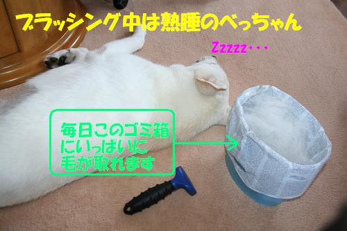 f0121712_16351520.jpg