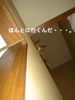 b0098652_2315697.jpg