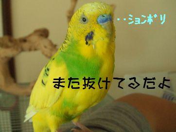 b0082757_0475981.jpg