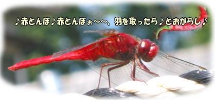 f0082367_10122359.jpg