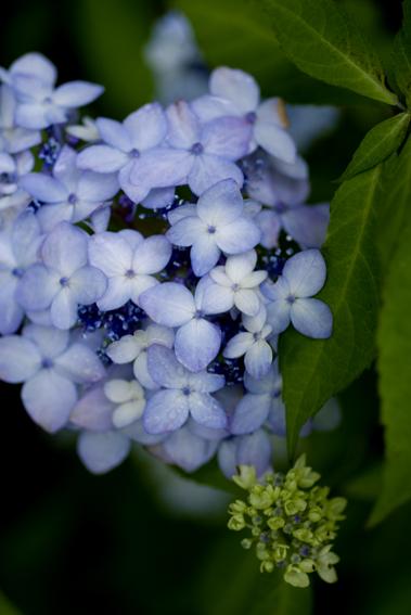 雨の日の寂しげな花たち_d0111087_6105097.jpg